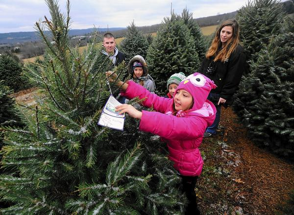 Hannah Mack 8, of Palmerton, hangs a note on the tree her family donated to a member of the military through the Trees for Troops program at Yenser's Tree Farm in Lehighton. Also pictured are (from left) her father, Army Staff Sgt. Casey Mack, siblings Callie, 10, and James, 6, and mother Terri.