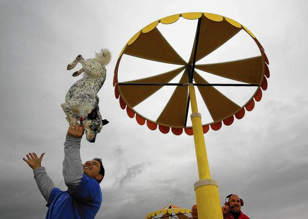 Dog trainer Chris Perondi watches as Crazy Confetti performs a trick on the Lucy Pet Foundation float, which along with other entries underwent a safety inspection in Irwindale in advance of their appearance in Pasadena's Rose Parade on New Year's Day.
