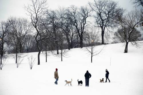 Dog owners gather in the snow in Lincoln Park near Diversey Parkway.