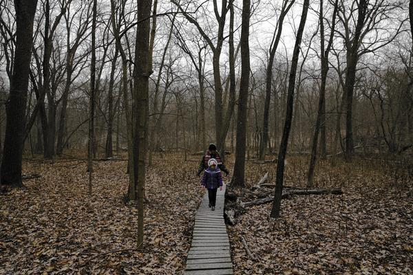 Debbie Goldstein, of Park Forest, walks with Morgan Rowland, 5, of New Lenox, on the boardwalk section of a trail at the Thorn Creek Woods Nature Preserve in Park Forest.