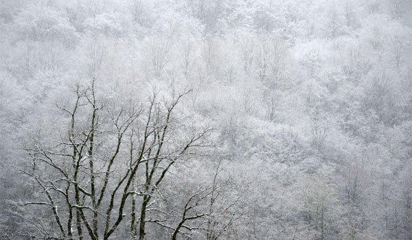 Snow covers the trees on a mountain side in Krasnaya Polyana near the Black Sea resort city of Sochi 2013.