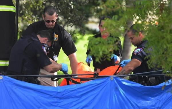 Lauderdhill Police and Broward Medical Examiner investigators remove a body from a canal just east of University Dr. and north of Inverrary Blvd., in Lauderhill, Wednesday, Dec. 11, 2013.