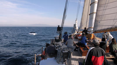 San Diego: Whale watching on a yacht guarantees no-seasickness sailing