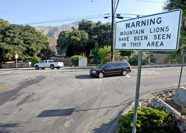 A sign warning residents about Mountain lions is permanently posted at Briggs Avenue and Shields Street in La Crescenta on Thursday, July 22, 2010.