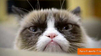 Grumpy cat makes a holiday music video with friends