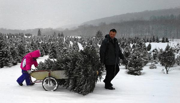 "Manchester residents Chris Gisriel and his daughter, Cheyenne Elliott, 8, came to Thomas Tree Farm in Manchester to pick out a Christmas tree on Saturday, Dec. 14, in the midst of snow that was expected to gather several inches. Cheyenne thought the snow made it feel like Christmas, but her dad noted it was ""a little harder to walk through."" Wayne Thomas, owner of the farm along Route 30, said the snow didn't seen to slow business. ""They keep coming,"" he said."
