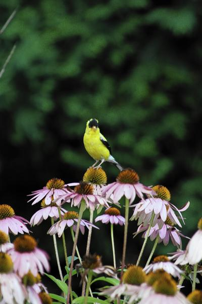 Lake County residents attended a Lake County Audubon Society meeting recently at the Libertyville village hall, eager to learn more about conservation strategies and networking among the North American Bird Migration Flyways.