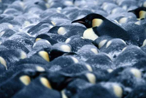 """March of the Penguins"""