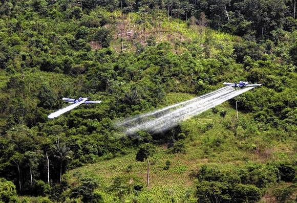 Anti-coca effort in Colombia