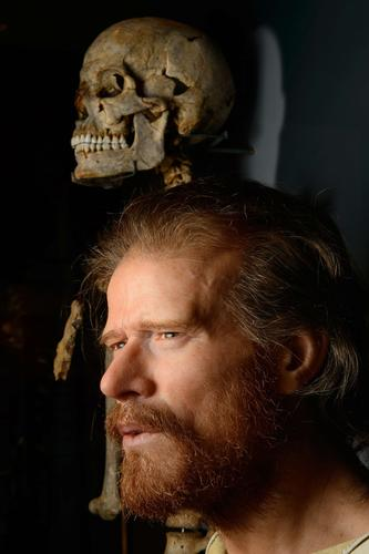 The skeleton of a neolithic man who was buried around 5,500 years ago in a long barrow 1.5 miles from the prehistoric monument of Stonehenge, a world heritage site, is displayed next to a reconstruction of the man's face at the new Stonehenge visitors center, near Amesbury in south west England on December 11, 2013. Forensic evidence tells us that  he is 25  40 years old, of slender build, born about 500 years before the circular ditch and banks, the first monument at Stonehenge, was built.