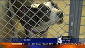 Orange County Supervisors Reject Online Map of Dangerous Dogs