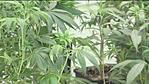 Bridgeport Mayor Bill Finch Tours Potential Medical Marijuana Facility