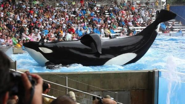 "SeaWorld CEO Jim Atchison talks about the company's new ad campaign against the killer whale documentary ""Blackfish"""