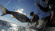 Rockfish quotas stir controversy