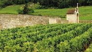Favorite Burgundies from a wine expert