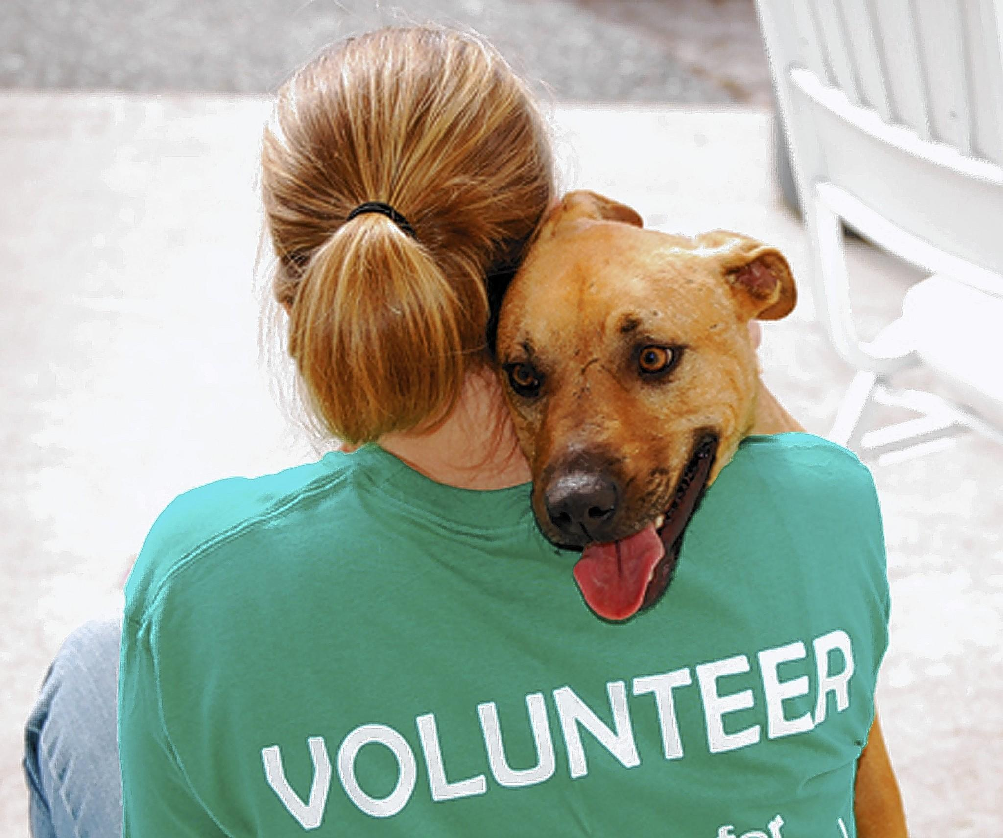Remember selfless local volunteers who devote countless hours and often personal resources to care for animals. Supporting local groups either through contributions or volunteer work is vital to their mission.