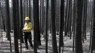 Rim fire losses between $250 million and $1.8 billion, study finds
