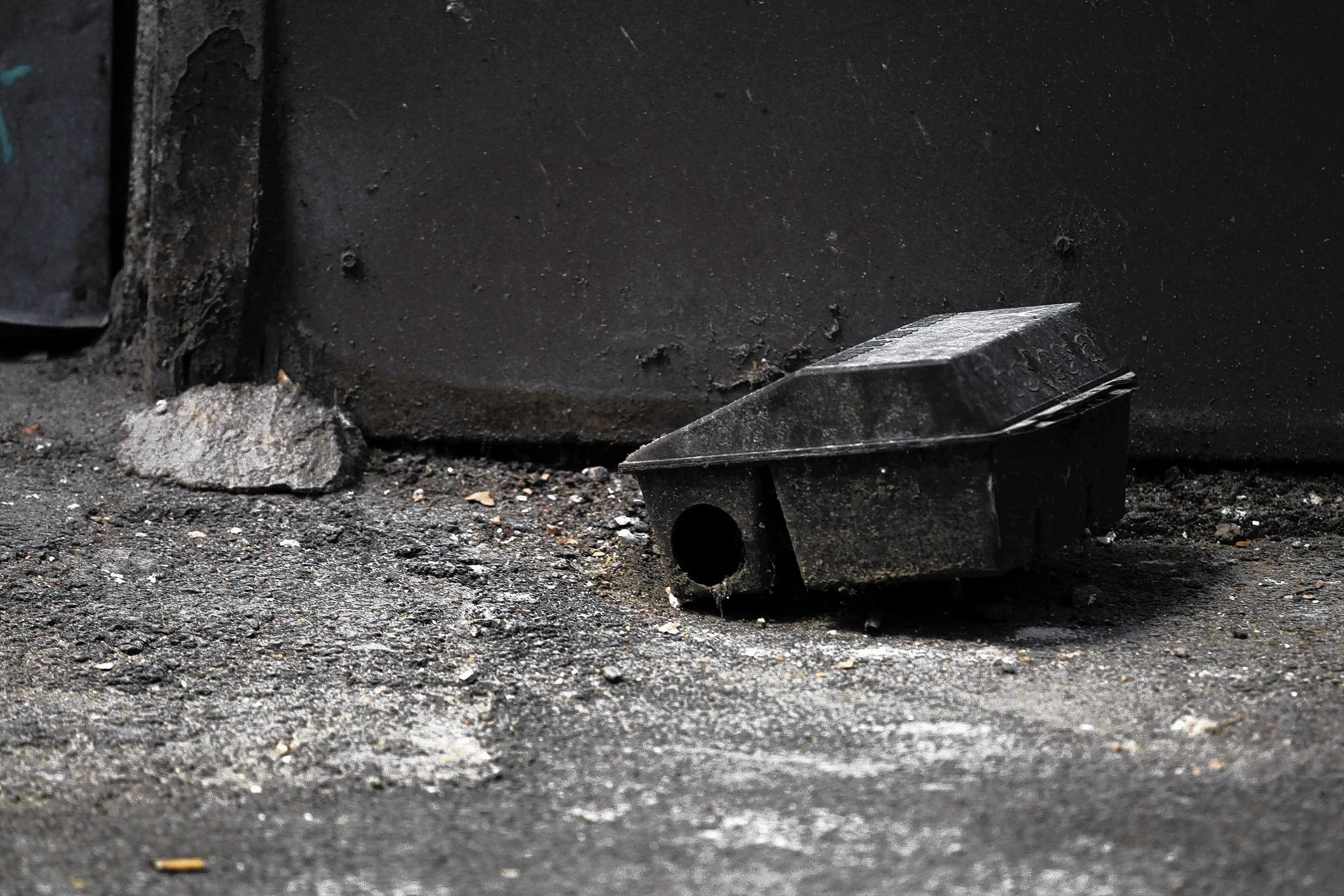 A trap waits near Lower Wacker and Lower Michigan drives in Chicago. Rats coming up pipes is uncommon but not rare.