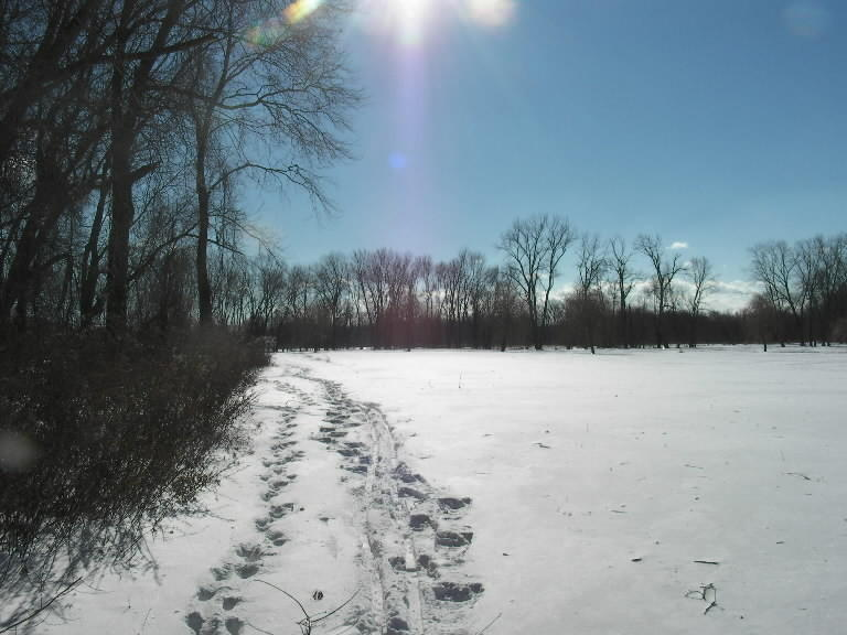 The Great Meadows Conservation Trust will again host its Brisk Winter Walks series.