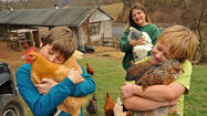 No harm, no fowl in Howard County case of the missing chickens