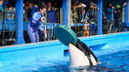 Pictures: Shamu Up Close