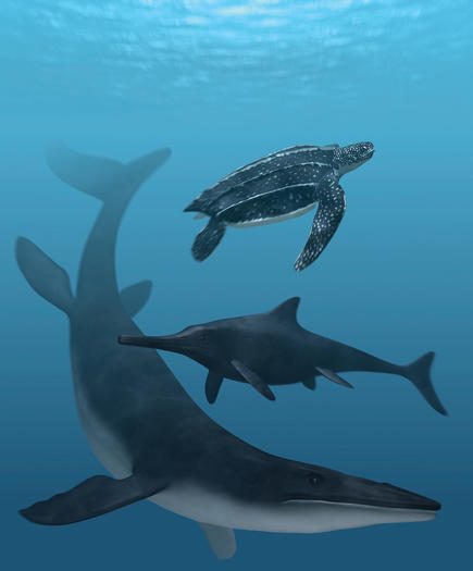 An artist's rendition shows the coloration of the ancient leatherback turtle, mosasaur and ichthyosaur, top to bottom.