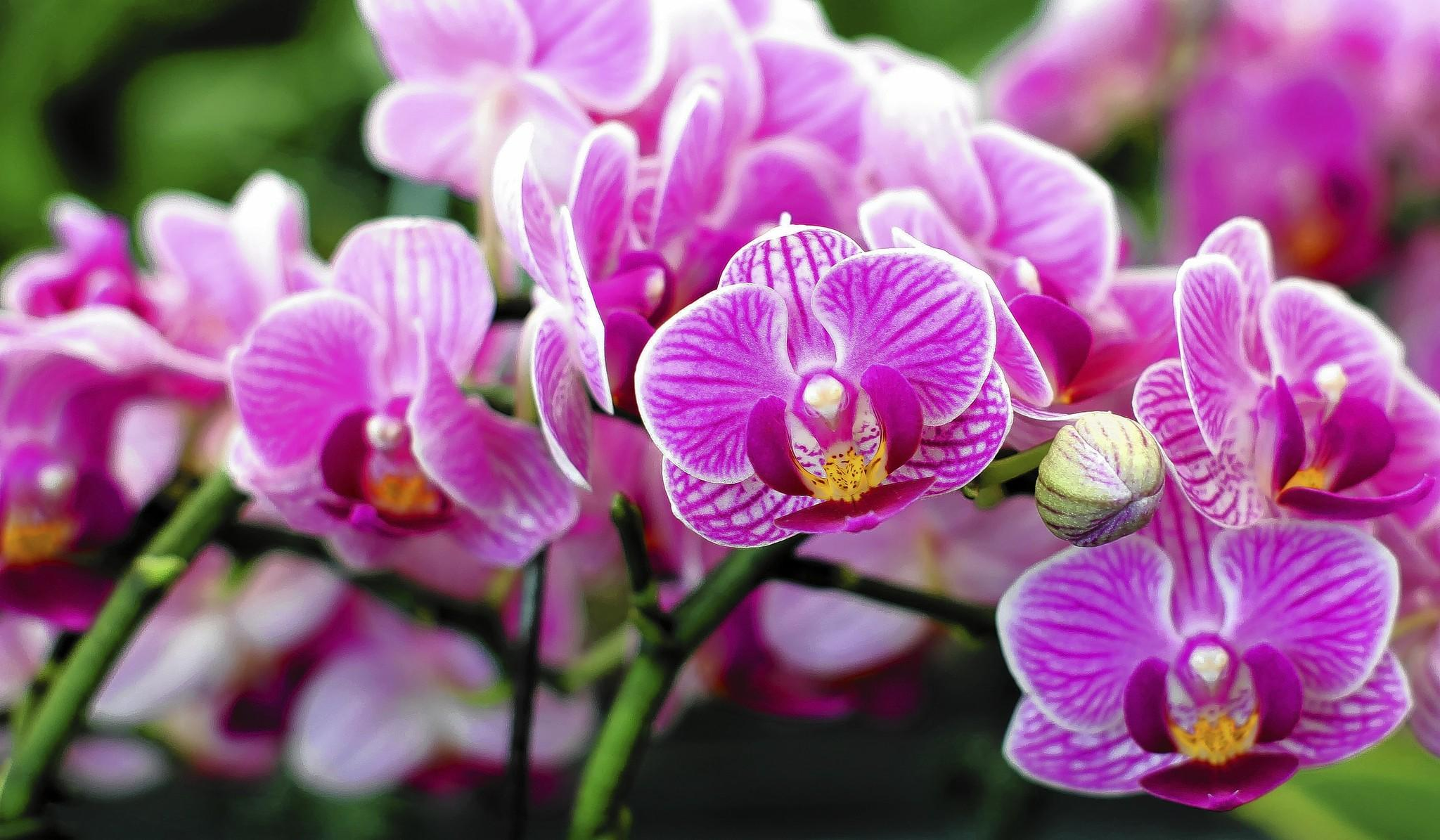 Most orchids don't appreciate direct sun, according to one expert.