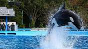 Video: Amid 'Blackfish' controversy, SeaWorld sets attendance record