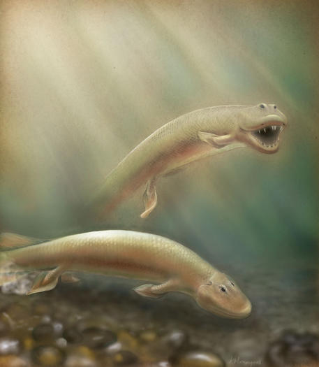 Tiktaalik was a fish that could walk, scientists say