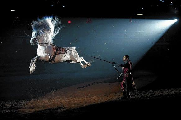 Medieval Times show at Kissimmee castle.