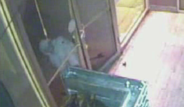 A would-be burglar pulls a door that opens inward at The Shambles bar on the West Side.