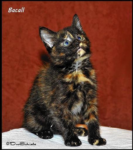Bacall