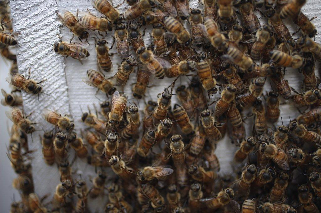 A new virus has leaped from plants to honeybees and could be contributing to the collapse of commercial hives, a study says.