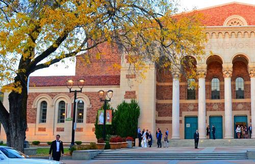 One of Sacramento's many grand shade trees stands before the Sacramento Memorial Auditorium on J Street.