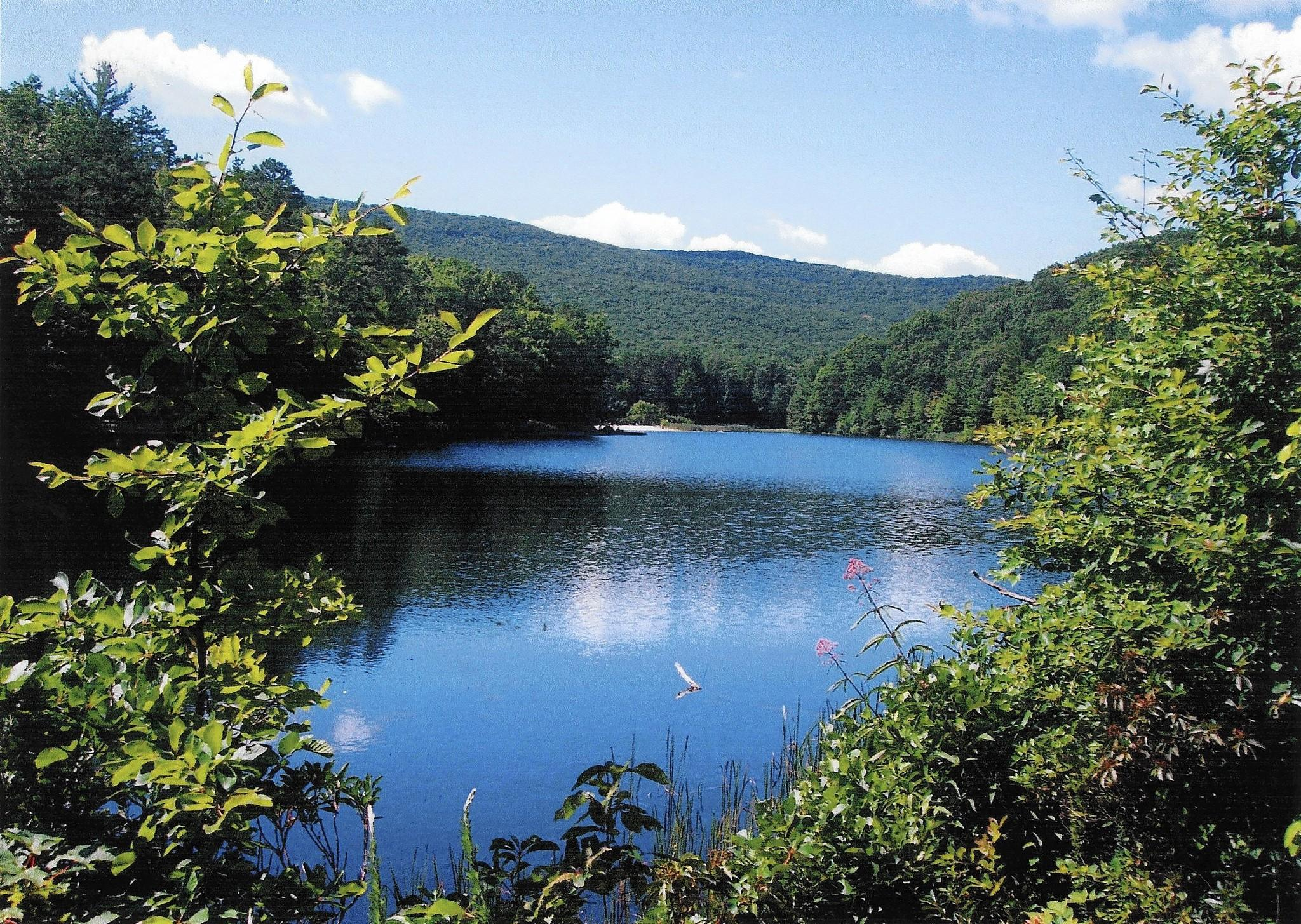 In the past, the U.S. Forest Service has made it a top priority to preserve the purity of the water in George Washington National Forest, but the land also has vast untapped deposits of natural gas.