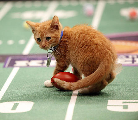 "Move over, Puppy Bowl! Hallmark Channel is introducing the Kitten Bowl, calling it the ""greatest feline showdown in cable television history."" Here's a look at some action shots to promo the event aimed at encouraging adoption from local shelters:"
