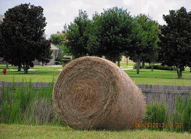 Bale of hay at the Lakes of Mount Dora, part of an operation that is in dispute.