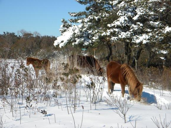 Wintertime on Chincoteague