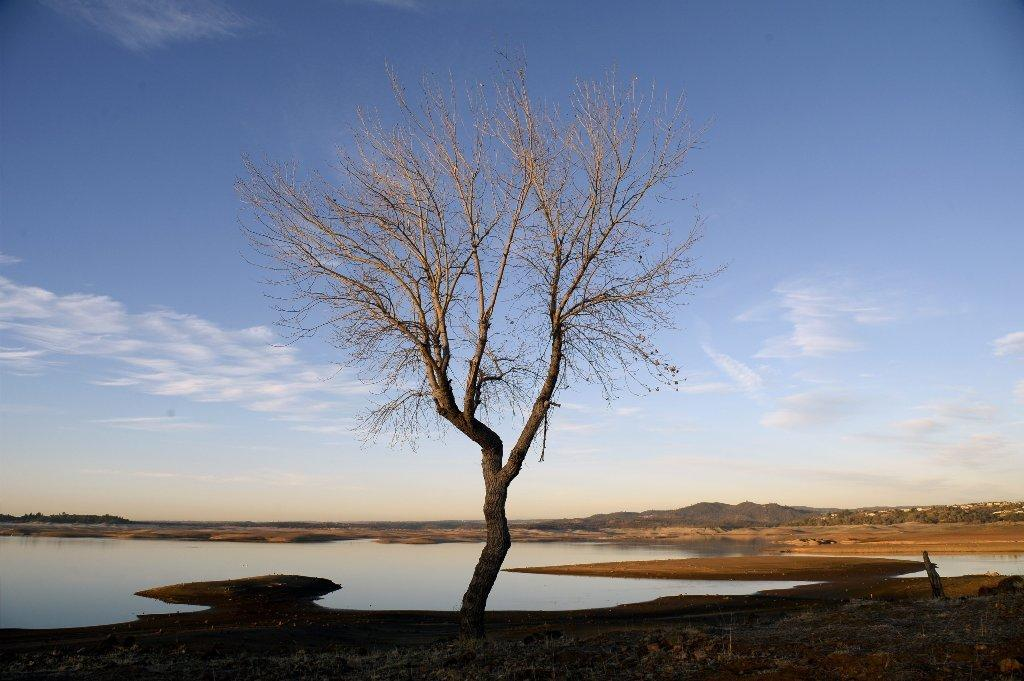 Seen above on Tuesday, a tree that is usually at the banks of Folsom Lake outside Sacramento is now several hundred feet away from the water. In his drought emergency declaration, Gov. Jerry Brown asked Californians to cut their water usage by 20%.