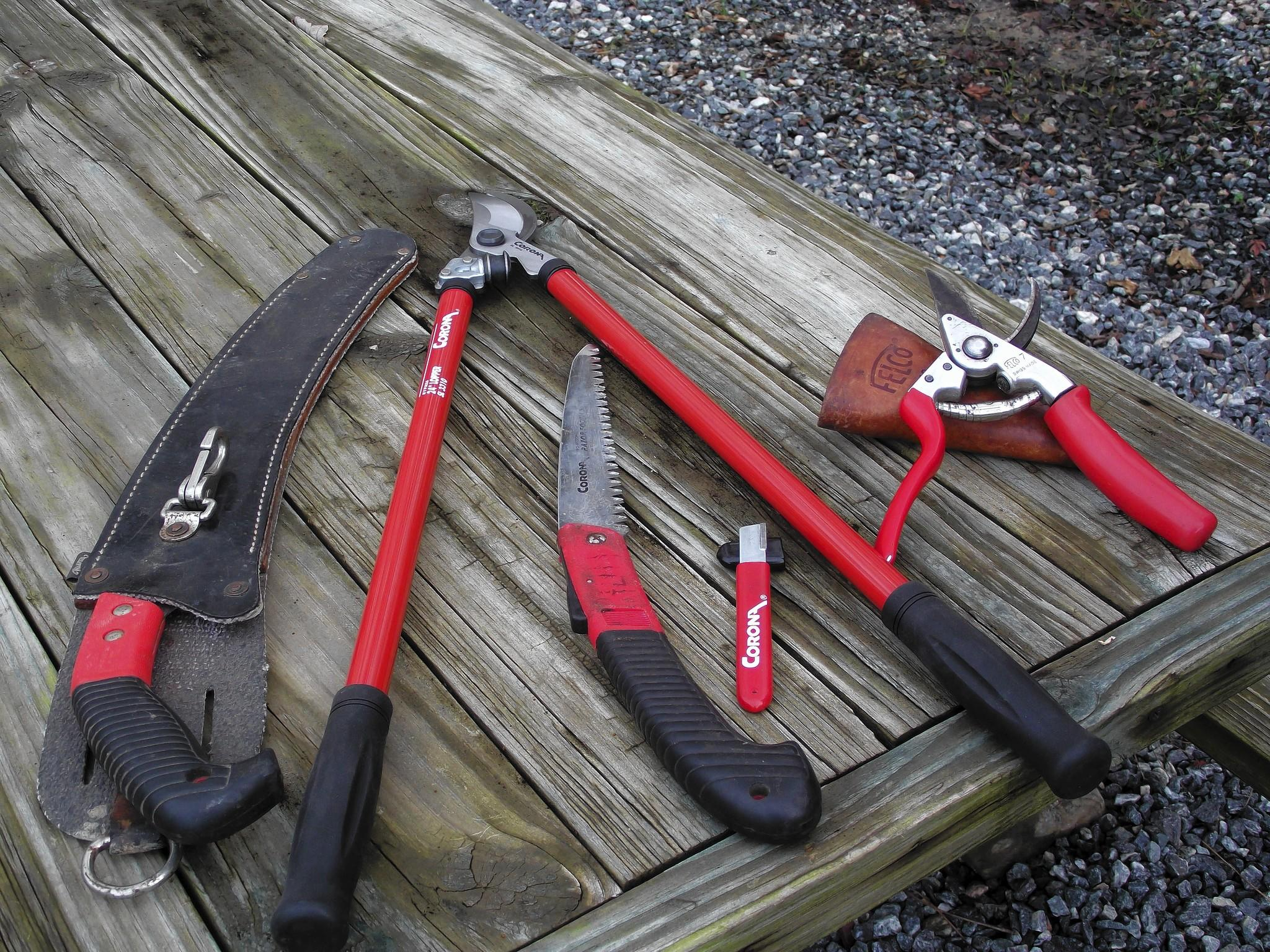 Some tools needed for proper pruning include bypass pruners, razor-teeth saws and loppers; holsters can be used for easy access.
