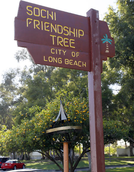 The Sochi Friendship Tree resides in Long Beach's Recreation Park. The metal object by the lemon tree is a peach pole.