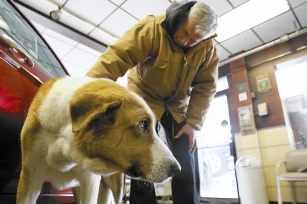 John Fenzel pets his Iraqi War dog, Bashur, at his car dealership in Hampshire this month, about 10 years since he got the dog. Bashur was shipped to John in 2004 from Iraq where his son, Michael Fenzel, was stationed.