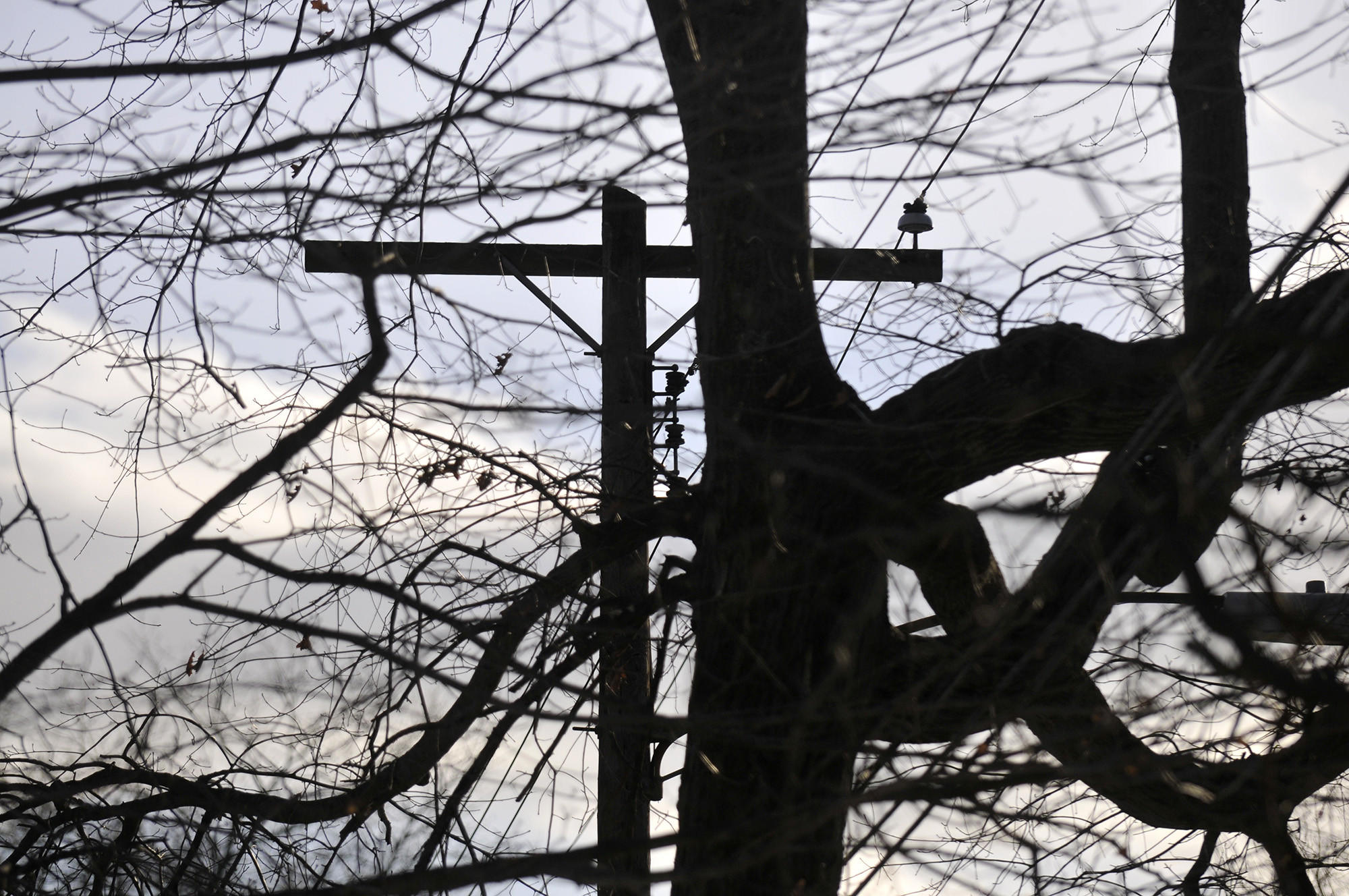 Members of the Garden Club of New Haven are advocating for the protection of certain Connecticut trees that are growing near power lines.