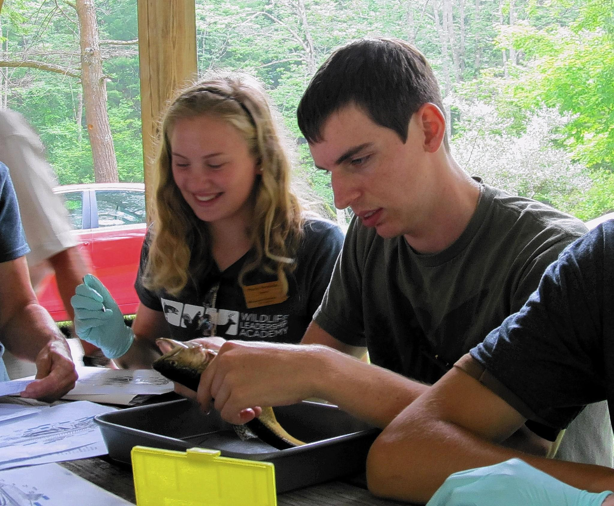 Drew Labenberg (right) of Emmaus works on dissecting a brook trout last July during the Brookies field school of the Wildlife Leadership Academy. The WLA and other outdoors camps are hoping to get more Lehigh Valley high school students involved with the experiential learning experience. Photo contributed by Drew Labenberg