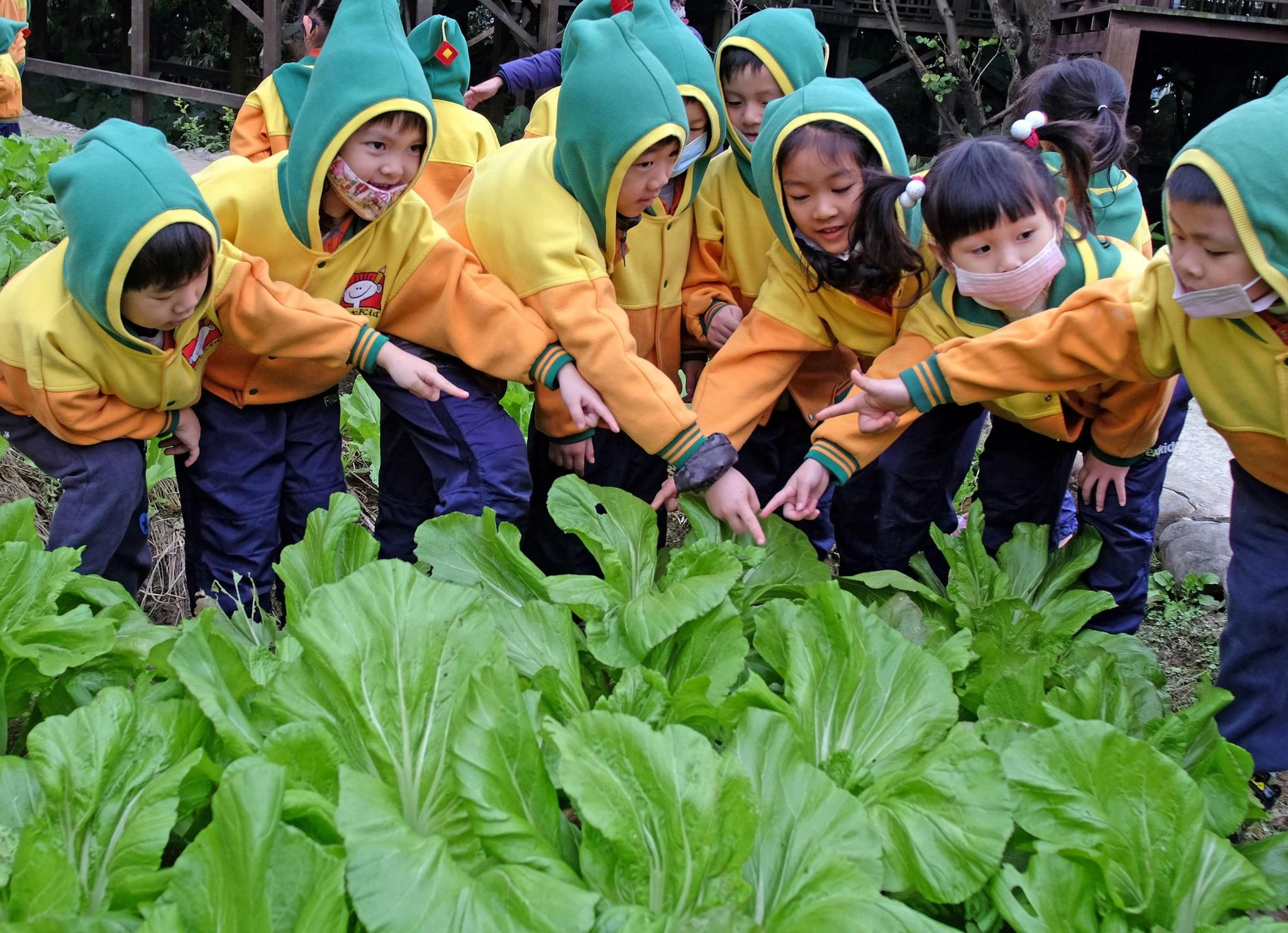 Children from a kindergarten pose for photos in front of a vegetable patch during a Hakka lunar new year tour in Taipei on January 21, 2014.