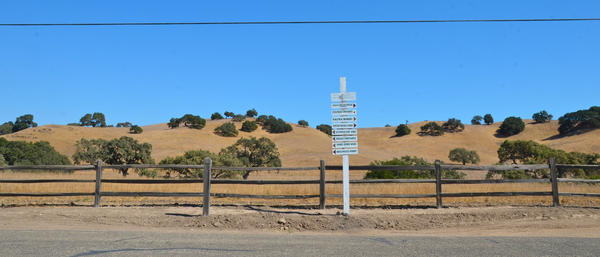 Los Olivos: Grapes grown here