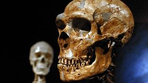 Neanderthal DNA lives on in modern humans, research shows