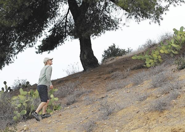 Derek Ostensen, president of Laguna Canyon Foundation, walks up a hillside that the organization and Laguna Beach County Water District are working to restore to its native habitat. Plants in sections of the hillside are extremely brittle due to lack of rainfall.