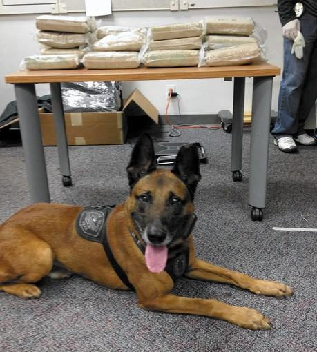 Huntington Beach police seized 27 kilograms of cocaine Tuesday with the help of Bohdy, a police dog specializing in narcotic detection.