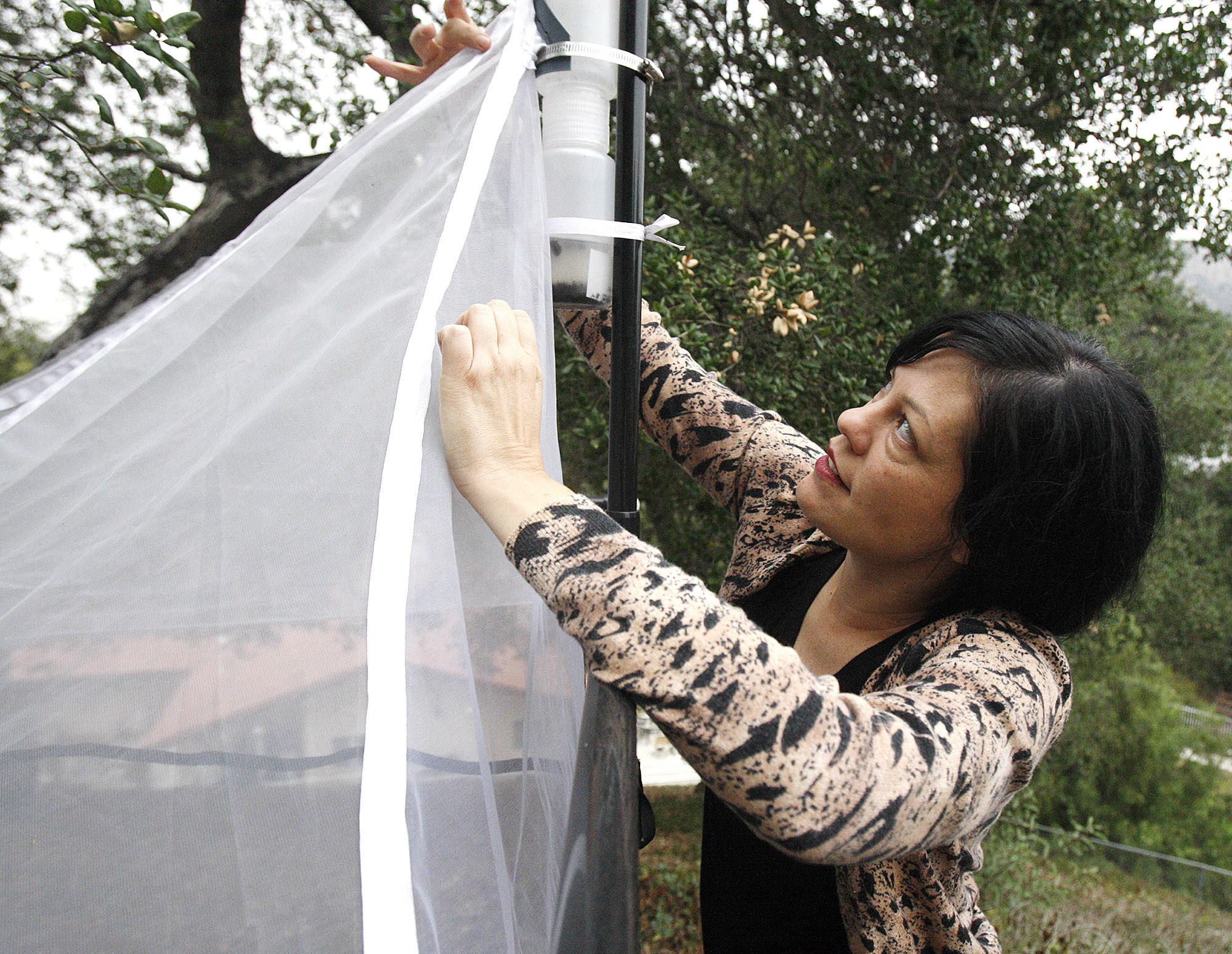 Assistant Collections Manager Lisa Gonzalez of the Entomology Department for the Natural History Museum Bioscan Project points out where spiders set up to easily catch meals inside an insect collection station at a home in Glendale on Thursday, January 30, 2014. There are 30 other sites set up in the Los Angeles area to study insects in the urban environment.